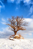 Old tree in a winter field on a background of blue sky Royalty Free Stock Photography