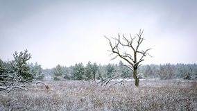 Old tree on winter meadow Stock Photos