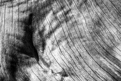 Old tree wooden texture with cracks and wrinkles. Monochrome. Wood surface of and old tree exposed - Wood Background and Texture - Cracks and wrinkle of classic Stock Image