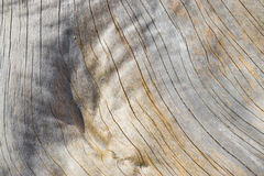 Old tree wooden texture with cracks and wrinkles. Wood surface of and old tree exposed - Wood Background and Texture - Cracks and wrinkle of classic dried wood Stock Image