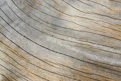 Old tree wooden texture with cracks and wrinkles. Wood surface of and old tree exposed - Wood Background and Texture - Cracks and wrinkle of classic dried wood Royalty Free Stock Photos