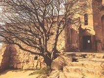The old tree in the yard of Jvari monastery near Mtskheta Georgia.  royalty free stock photography
