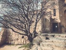 The old tree in the yard of Jvari monastery near Mtskheta Georgia.  royalty free stock photos
