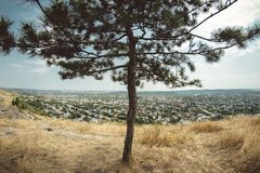 Old tree in a yellow hill. In Pyatigorsk, Russia Stock Image