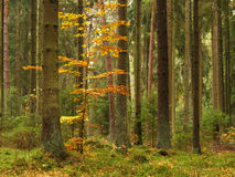 Old trees Royalty Free Stock Images