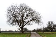 Old Trees Along Rural Road Stock Image