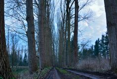 Old trees and empty road Royalty Free Stock Photo