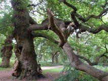 Winding Branch Landscape Royalty Free Stock Photo