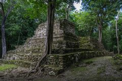 Old trees growing on ancient Maya temple complex in Muil Chunyaxche, Mexico royalty free stock image