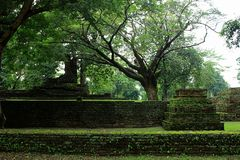 Old trees in historic. Ruins of old trees in one of the northern provinces of Thailand Stock Photography