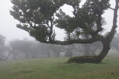 Old Trees in the mist Stock Photo