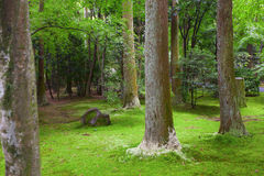 Old trees and moss Stock Photography
