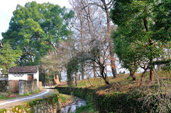 Old trees. In Nanping Village,china Stock Photo