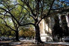 Old trees near L`arc de Triomphe in Paris Royalty Free Stock Photos