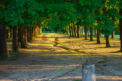 Old trees in picturesque alley park Royalty Free Stock Images
