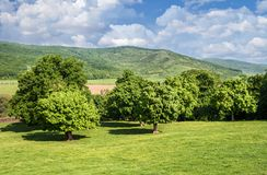 Old trees on Romanian hills Royalty Free Stock Photography