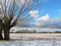Old trees in Rusne island in winter, Lithuania Royalty Free Stock Photo