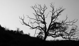 Old trees silhouette. In China, a small mountain village, the old trees age a hundred years Stock Photos