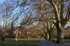 Old trees in town park Royalty Free Stock Images