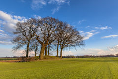 Old Trees on a tumulus or grave mound Royalty Free Stock Image