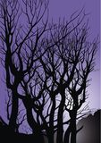 Old trees in the violet night Stock Photography