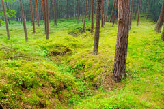 An old trench in the forest. Stock Photography