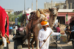 Old tribal nomad cameleer going to camel  decoration competition at cattle fair in hindu holy town Pushkar Stock Images