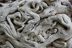 Old tropical tree bark. Stock Photography