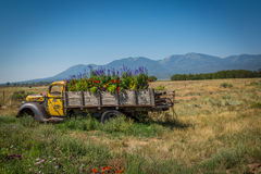 Old Truck in a flowery meadow Stock Photo