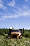 Old truck in Meadow. With blue sky Royalty Free Stock Photography