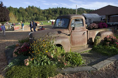 Old truck at pumpkin farm Royalty Free Stock Photo