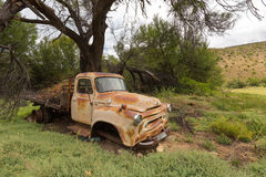 Old Truck under a tree on a farm Royalty Free Stock Images