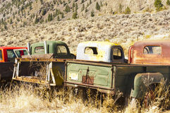 Old trucks in field. Old collectable trucks sit rusting in a field Royalty Free Stock Photos