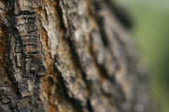 Old trunk. Background of a old tree trunk Royalty Free Stock Photography