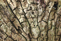 Old trunk of an oak tree. Pattern of an old trunk of an oak tree Stock Photo