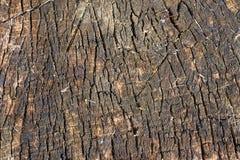 Old trunk texture. Old trunk  texture. Circular decaying wood. Closeup Stock Photography