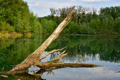 Old trunk in water Stock Photography