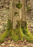 Old trunk wood Royalty Free Stock Images