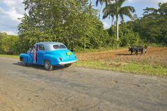 Old turquoise car opens door in front of an Oxen and man plowing field in the Valle de Vi�ales, in central Cuba Stock Image