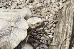 Old turtle Stock Photo
