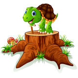 Old turtle posing on tree stump Royalty Free Stock Photos