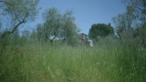 Old Tuscany villa behind grasses and olive trees. Medium long handheld low angle high dynamic range shallow depth of field shot of an old Italian villa behind stock footage