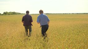 Old two farmers explore are studying. man Wheat Field summer in the field wheat bread. slow motion video. farmer Smart. Farming ecology concept. shake hands stock video footage