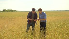 Old two farmers explore are studying. man Wheat Field summer in the field wheat bread. slow motion video. farmer Smart. Farming ecology concept. agriculture stock video