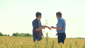 Old two farmers explore are studying. man Wheat Field summer in the field wheat bread. slow motion video Smart lifestyle. Farming. farmer ecology concept stock footage