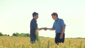 Old two farmers explore are studying. man Wheat Field summer in the field lifestyle wheat bread. slow motion video Smart. Farming. farmer ecology concept stock video footage