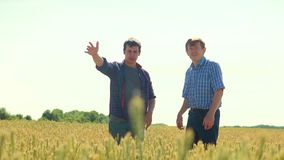 Old two farmers explore are studying. man Wheat Field summer in the field wheat bread lifestyle. slow motion video Smart. Farming. farmer ecology concept stock footage