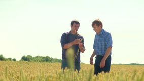 Old two farmers explore are studying. man Wheat Field summer in the field wheat bread. slow lifestyle motion video Smart. Farming. farmer ecology concept stock footage