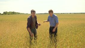 Old two farmers explore are studying. man Wheat Field summer in the field wheat bread. slow motion video. farmer Smart. Farming ecology concept. agriculture stock footage