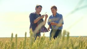 Old two farmers explore are studying. man Wheat Field summer in the field wheat bread. slow motion video. farmer Smart. Farming ecology concept. shake hands stock video